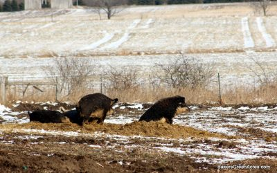 Farming for Fun and Profit: a farmer's winter thoughts