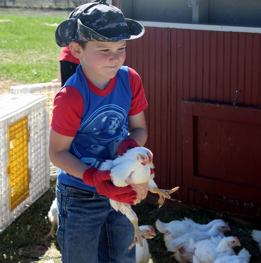 homestead wealth farm kids pastured poultry