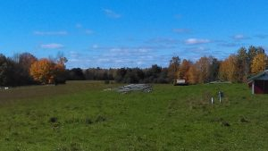 Fall on the farm: pastured chickens, pastured hogs, hog harvest time