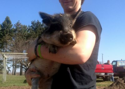 Heritage breed Mangalitsa weaner and feeder pig homeschool homestead economics