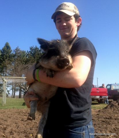Sam with his Mangalitsa weaner pig buddy.