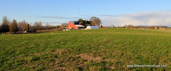 Farm wealth is the homestead farm