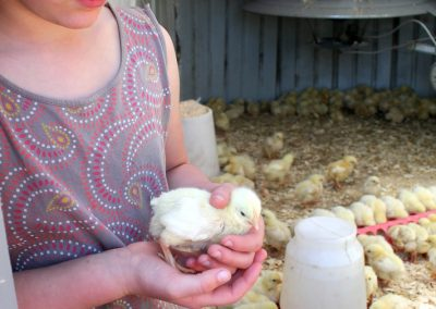 Children and peeper chicks: anyone can farm!