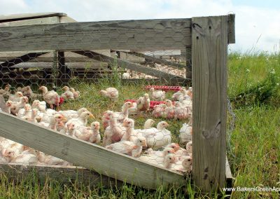 custom Pasture Raised Chicken -Non-GMO-Beyond Organic