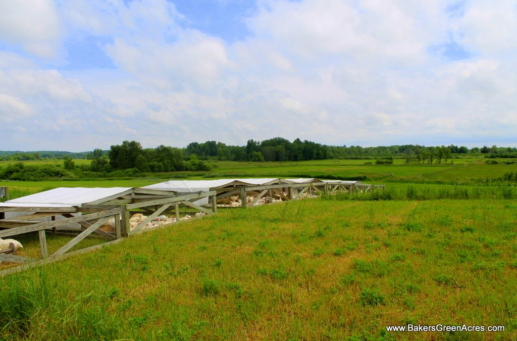 The Wonder Of It All: Pastured Poultry and the Joy of Farming