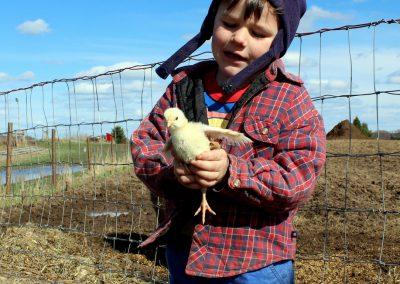 Whole pasture raised, beyond organic, GMO free chickens start as custom raisedchicks. Homestead hobby farm. time