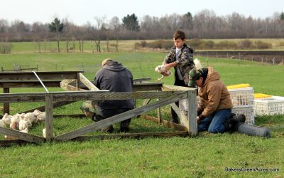 Anyone Can Farm: Pastured Poultry