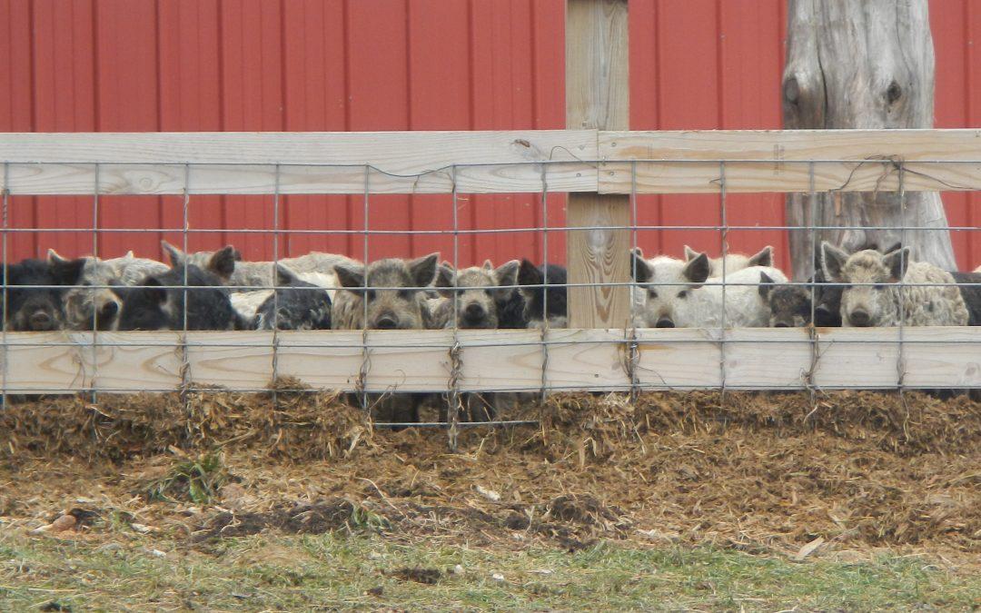 Farm Fence Talk