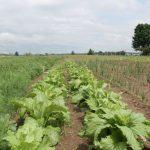 natural organic homestead garden pests economics